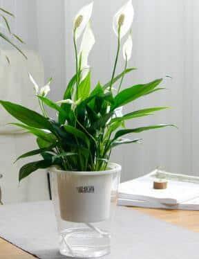 生活   办公室绿植,颜值高即正义插图8