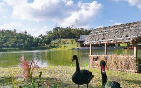 无滤镜丨珠海香山湖公园——闲适的生活